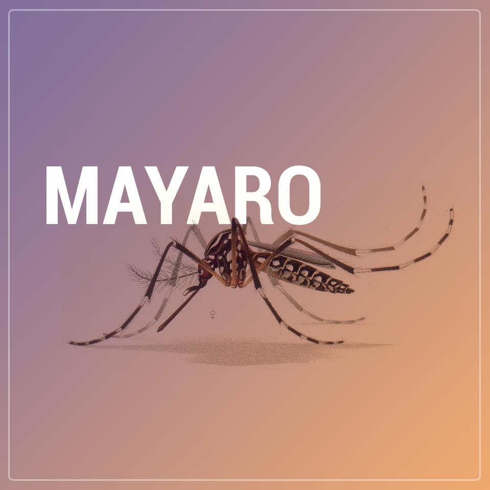 Mayaro: Mais um vírus transmitido pelo Aedes aegypti