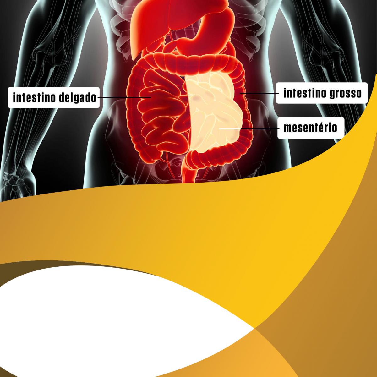 Conheça o MESENTÉRIO: novo órgão humano